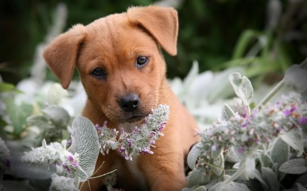 Puppy Pictures Download Free